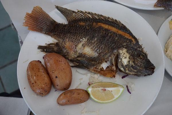Petrusfisch