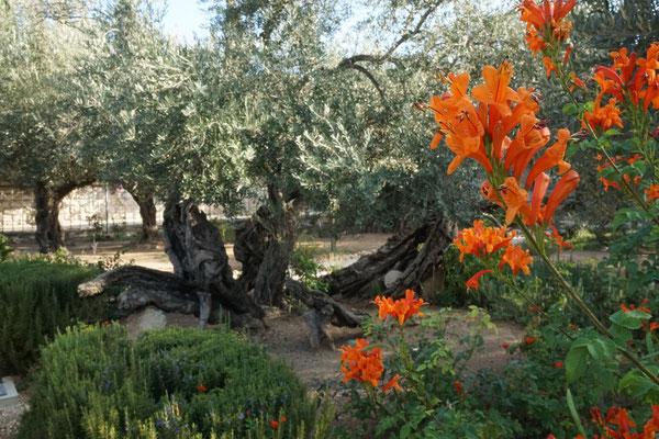 Garten Getsemani