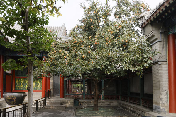Sommerpalast, Innenhof mit Kakibaum