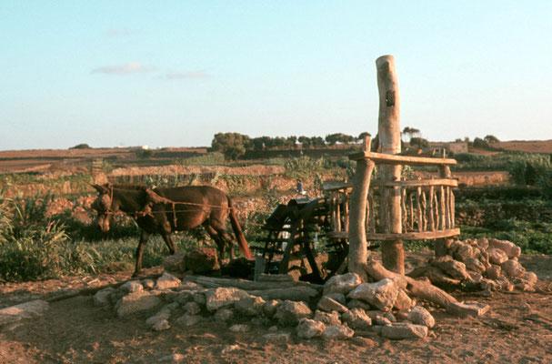 Alter Brunnen, angetrieben von einer Mulistärke