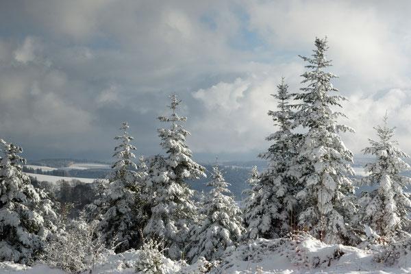 Weiße Pracht im Schwarzwald