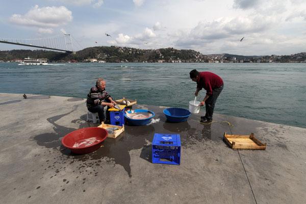 Fischer mit ihrem Fang am Bosporus