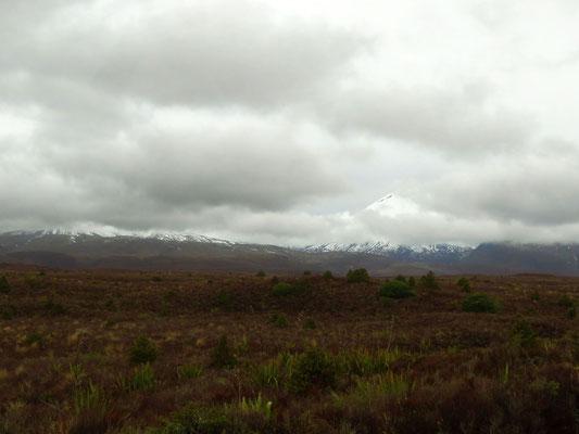 we did not see much of Tongarino NP either  -  vom Tongarino Nationalpark und seinen 3 Vulkanen sahen wir auch nicht viel