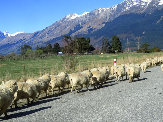 unser Verkehrsstau  - our one and only traffic jam