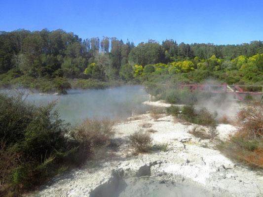 hot pools are being utilized as baths or to cook the vegetables  -  die heißen Seen werden als Bad genutzt, oder auch um das Gemüse zu kochen