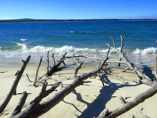 Blick auf Fraser Island, die weltgrößte Sandinsel  -  view onto Fraser island, the worlds biggest sand island