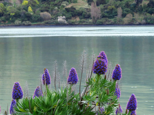 Pidgeon Bay on Banks Peninsula
