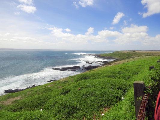 Coast of Phillip Island