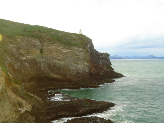 Albatrossfelsen auf der Otago Halbinsel  -  the cliff where the albatrosses nest on the Otago peninsula