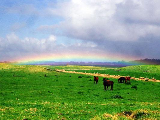the wather changes a lot and so we see many rainbows here  -  das Wetter ändert sich schnell und oft, also sehen wir jede Menge Regenbögen