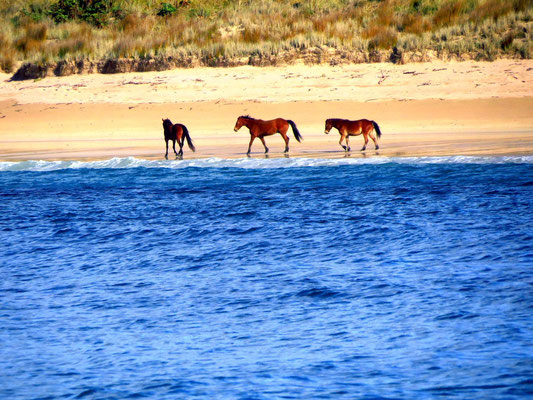 Seepferde !?!  Seahorses !?!