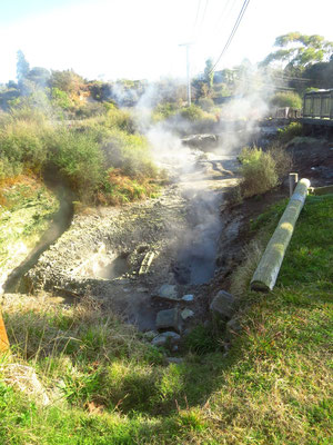 bubbeling mud pools in Rotorua  -  blubbernde Schlammpools in Rotorua