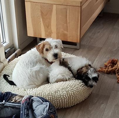 Nessy hat wieder eine Freundin.