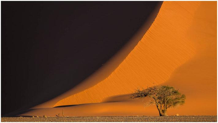 Leben in der Namib