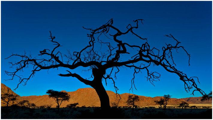 Bäume sind Gedichte, die die Natur in den Himmel schreibt