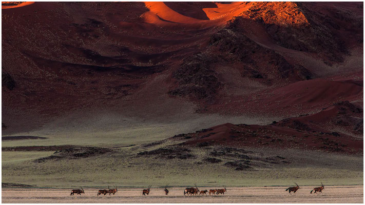 Oryx im Tsauchabtal