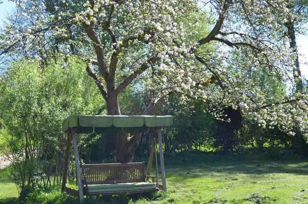 Fast so schön wie die japanische Kirschblüte: die Obstblüte in Seefrieden.
