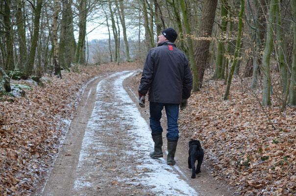 Zu jeder Jahreszeit gibt es etwas zu entdecken: Waldspaziergang mit Hund.