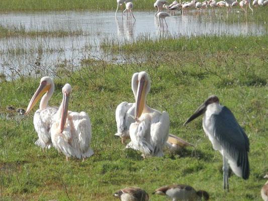 Lake Nakuru Nationalpark