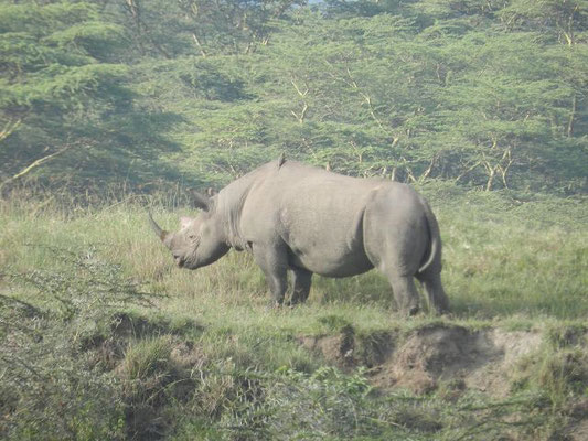 http://www.safari-in-kenia-24.de