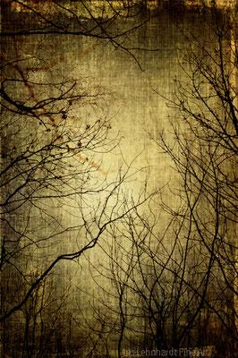 twilight silence.