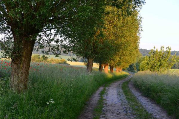 Choriner Amtsweg bei Brodowin