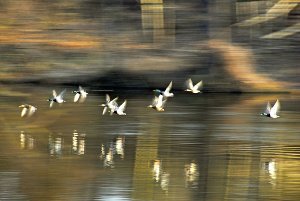 Take Off auf dem Amtsee
