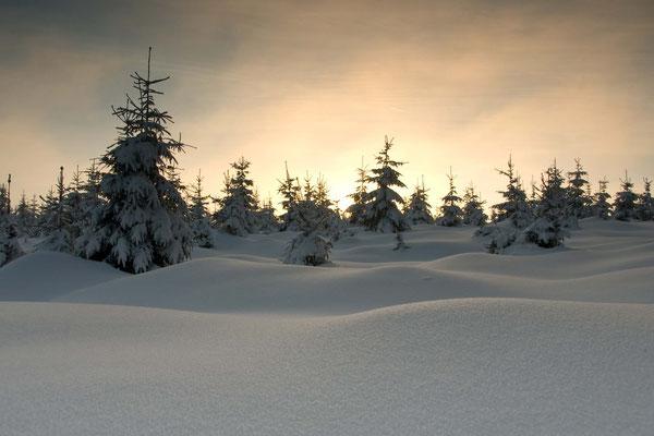Sandbrink, NP Harz