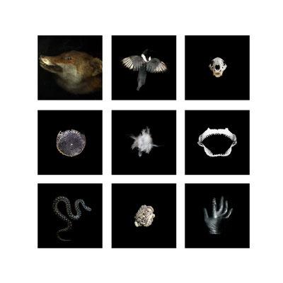 Michael Koch: tableau 2, C-Prints, Diasec
