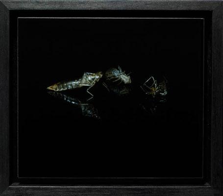 Michael Koch: Bolero, 2008, C-Print, Diasec, gerahmt/Schattenfuge, 18cm x 20cm