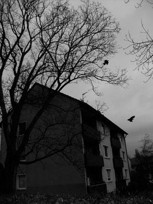 Michael Koch: Dorf (Krähen) 2014, C-Print