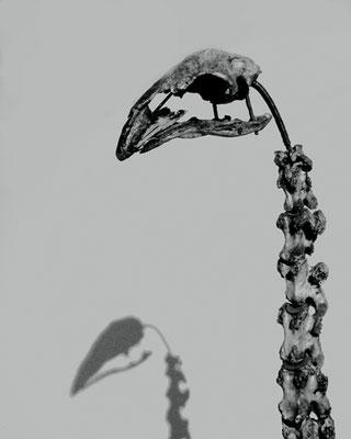 Michael Koch: Ostrich, 2017, Lambdaprint, Diasec