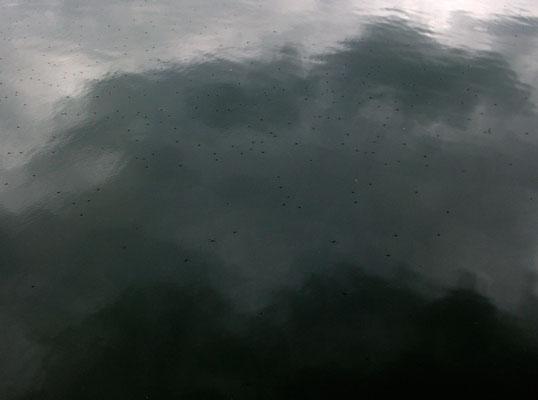 Michael Koch: Wasserläufer, 2014, C-Print, Diasec