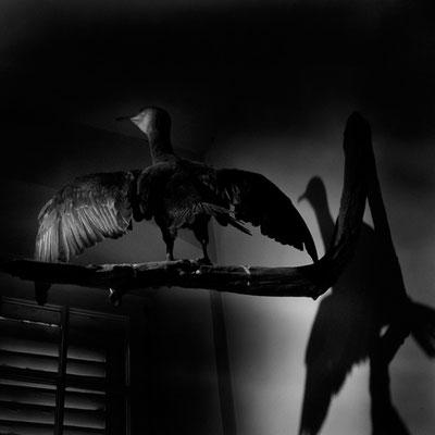 Michael Koch: studiobird, 2017, Lambdaprint, Diasec