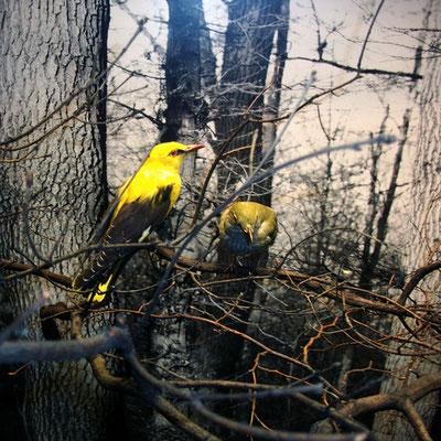 Michael Koch: yellow fellow, 2016, Lambdaprint, Diasec