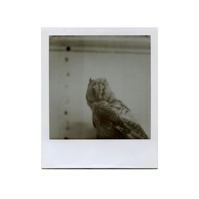Michael Koch: someone to watch over me, 2014, Polaroid