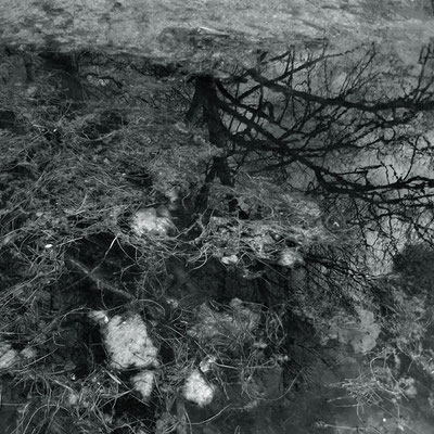 Michael Koch: Dyck II, 2014, C-Print , Diasec
