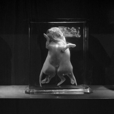 Michael Koch: the last dance, 2016, Lambdaprint, Diasec