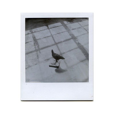 Michael Koch: Teichhuhn (Studio), 2014, Polaroid