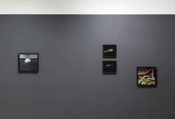 Forever more, Galerie Voss Düsseldorf 2009
