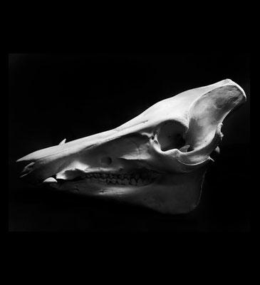 Michael Koch: Alien, 2017, Lambdaprint, Diasec