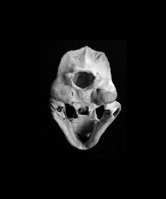 Michael Koch: eternal / skull II, 2016, Lambdaprint, Diasec