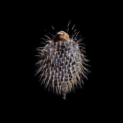 Michael Koch: blowfish, 2020, Lambdaprint, Diasec
