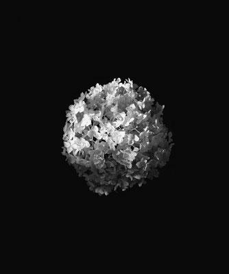 Michael Koch: Ursel, 2017, Lambdaprint, Diasec
