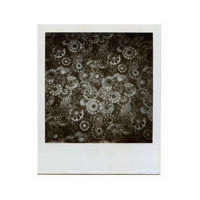 Michael Koch: KWA (Blumenteppich), 2000, Polaroid