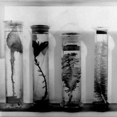 Michael Koch: eternal / plants, 2016, Lambda-Print, Diasec