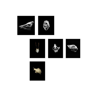 Michael Koch: tableau 4,  skulls, C-Prints, Diasec