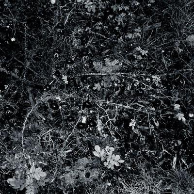 Michael Koch: vor dem Kreuze, 2014, C-Print, Diasec