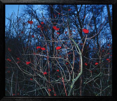 Michael Koch: Avebury, 2003, C-Print, Diasec, gerahmt/Schattenfuge