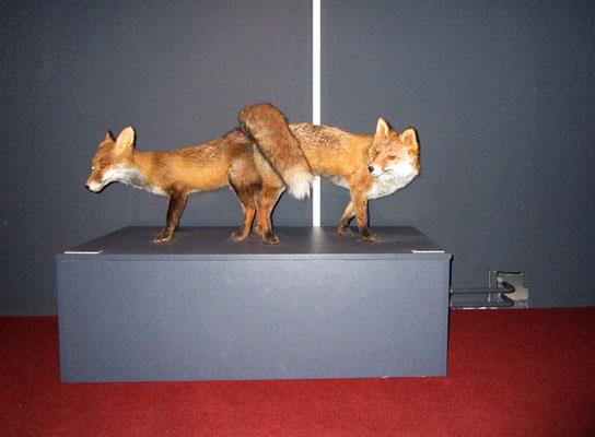 Michael Koch: foxy, 2017, Lambdaprint, Diasec